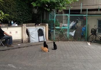 猫公園.jpg